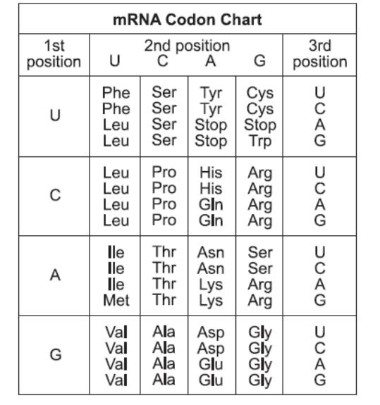 Mrna codon chart png